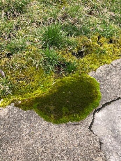 Mossy Crag